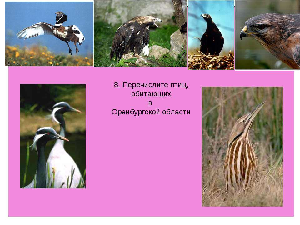 8. Перечислите птиц, обитающих в Оренбургской области