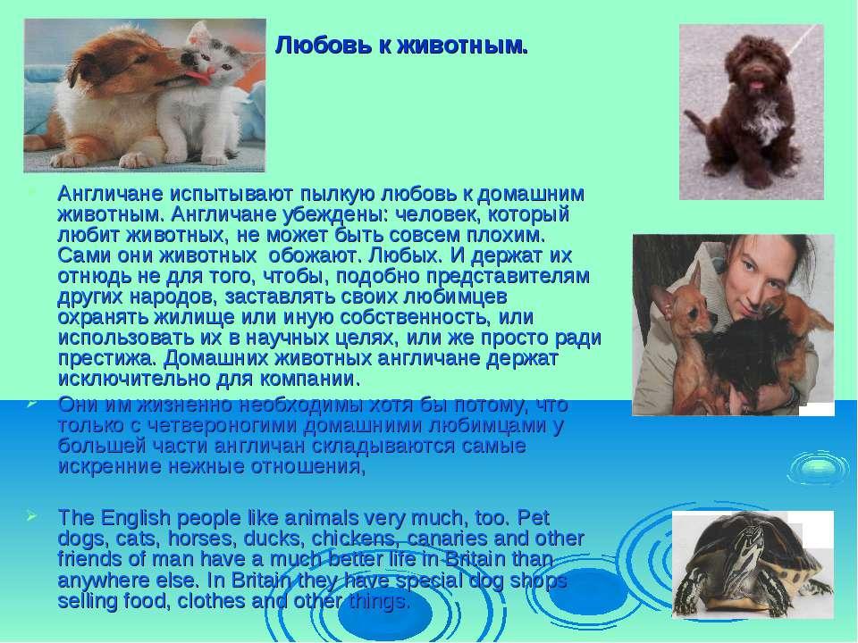 Любовь к животным. Англичане испытывают пылкую любовь к домашним животным. Ан...