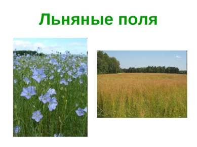Льняные поля
