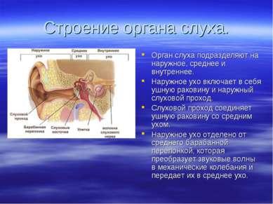 Строение органа слуха. Орган слуха подразделяют на наружное, среднее и внутре...