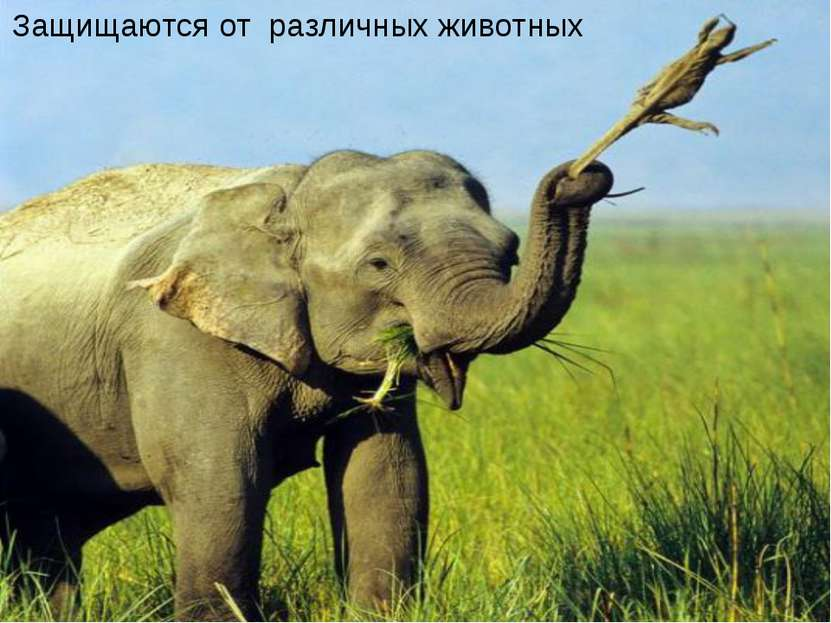 Защищаются от различных животных