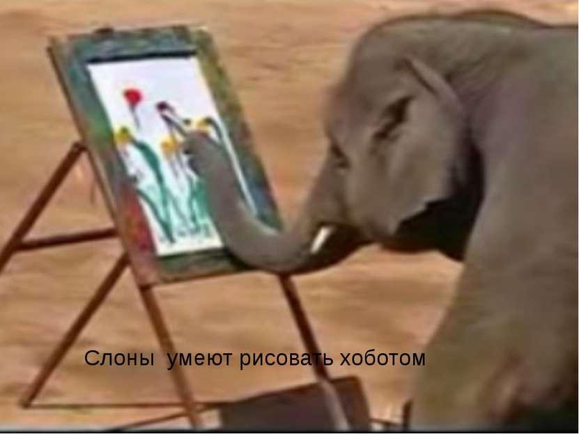 Слоны умеют рисовать хоботом