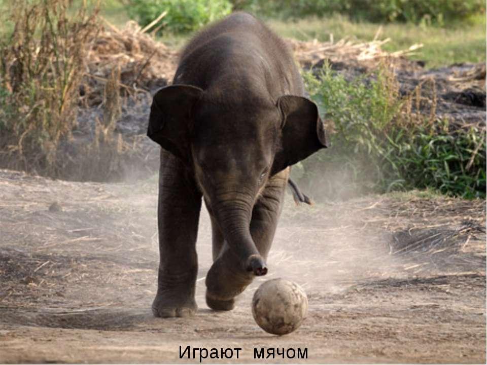 Играют мячом