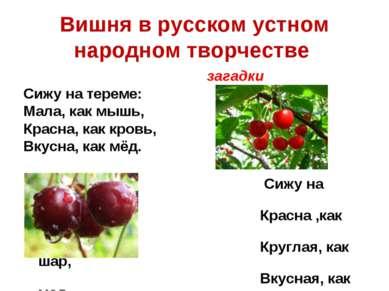 Вишня в русском устном народном творчестве загадки Сижу на тереме: Мала, как ...