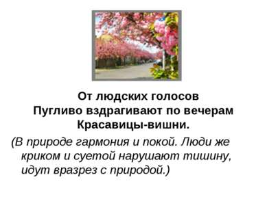 От людских голосов Пугливо вздрагивают по вечерам Красавицы-вишни. (В природе...