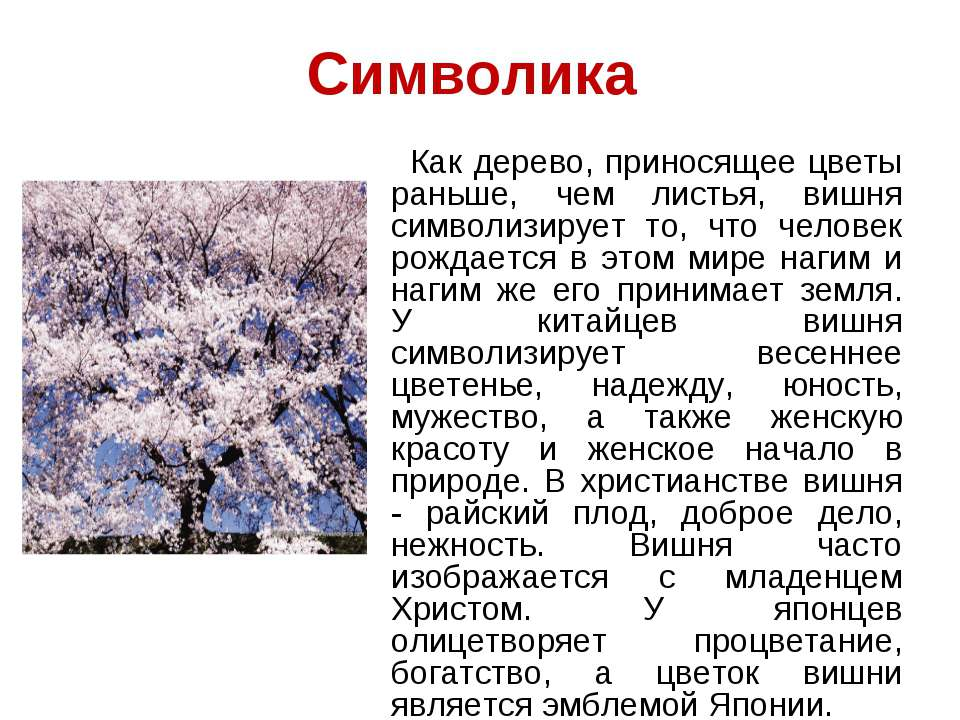Символика Как дерево, приносящее цветы раньше, чем листья, вишня символизируе...