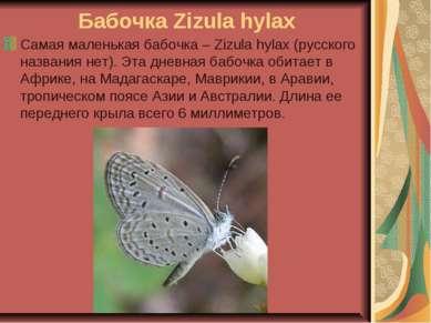 Бабочка Zizula hylax Самая маленькая бабочка – Zizula hylax (русского названи...