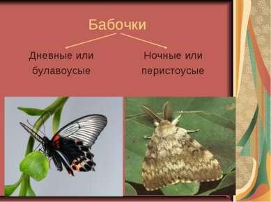 Бабочки Дневные или булавоусые Ночные или перистоусые