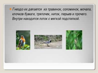 Гнездо их делается из травинок, соломинок, мочала, клочков бумаги, тряпочек, ...
