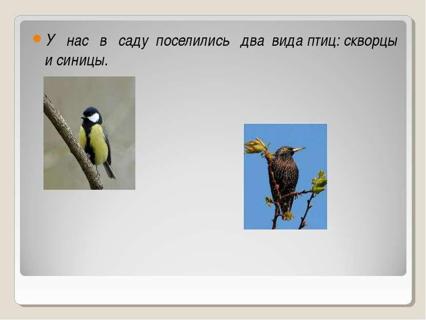 У нас в саду поселились два вида птиц: скворцы и синицы. У нас в саду поселил...