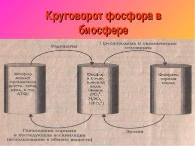 Круговорот фосфора в биосфере