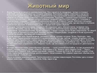 Фауна Урала не отличается оригинальностью. Она слагается из тундровых, лесных...