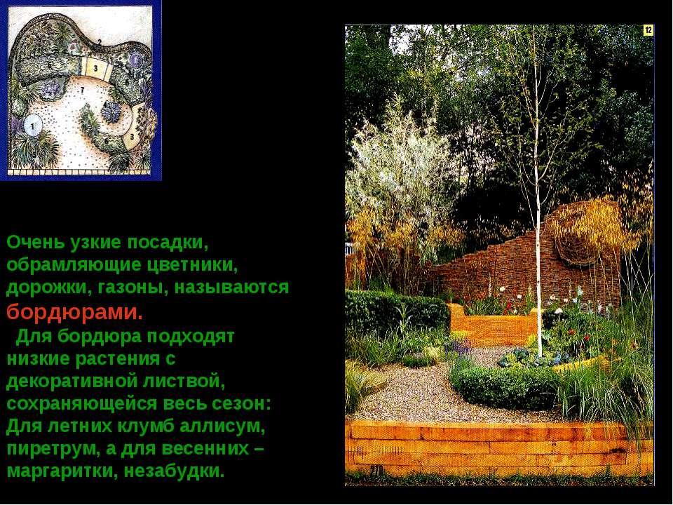 Очень узкие посадки, обрамляющие цветники, дорожки, газоны, называются бордюр...