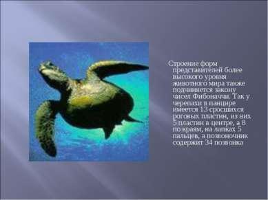 Строение форм представителей более высокого уровня животного мира также подчи...