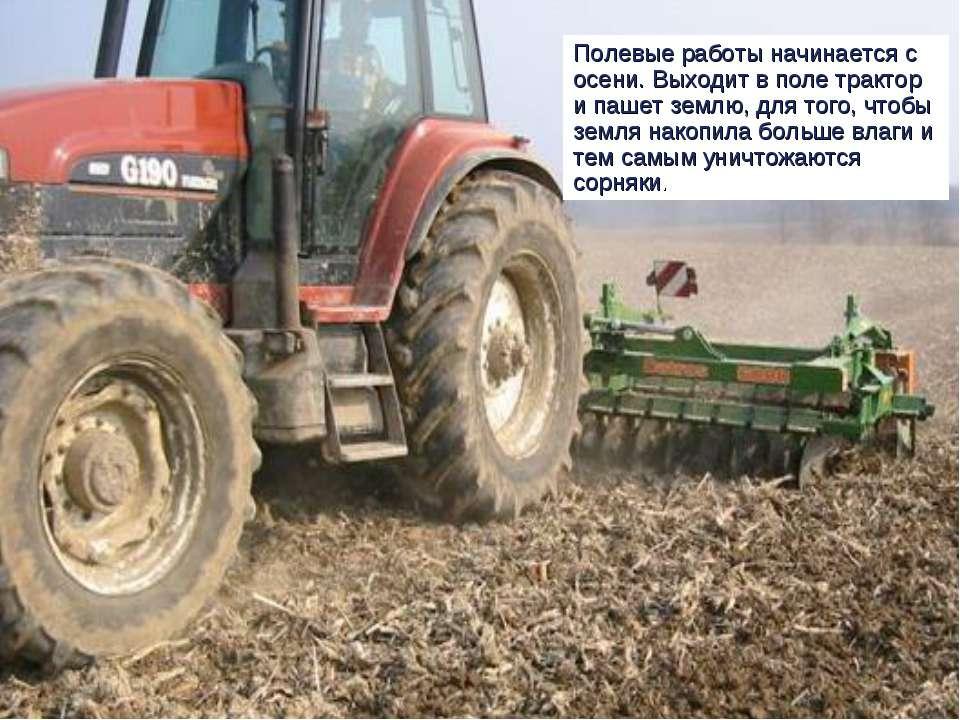 Полевые работы начинается с осени. Выходит в поле трактор и пашет землю, для ...