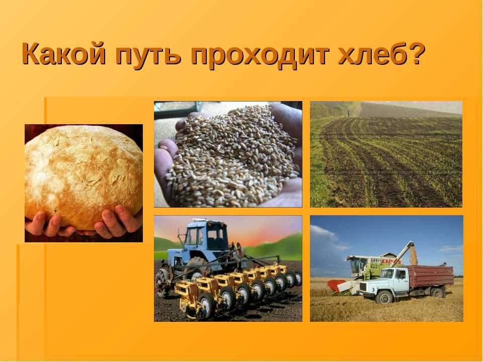 Какой путь проходит хлеб?