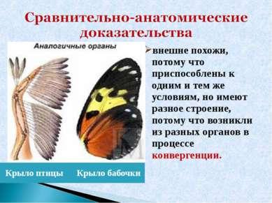 Крыло птицы Крыло бабочки внешне похожи, потому что приспособлены к одним и т...