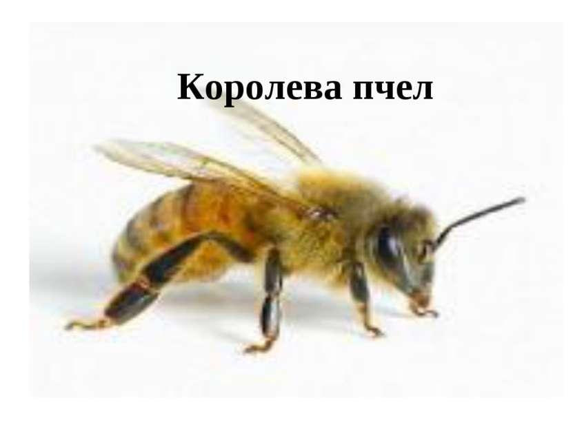 Королева пчел
