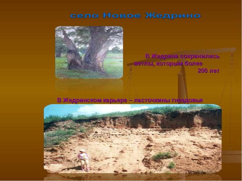 В Жедрине сохранились ветлы, которым более 200 лет В Жедринском карьере – лас...