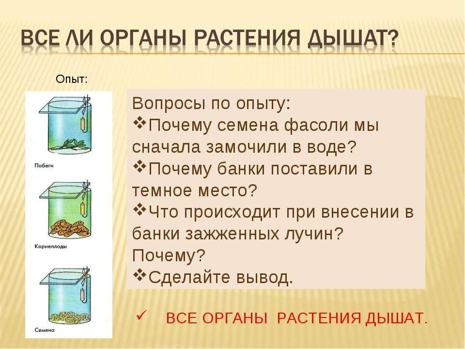 Опыт: Вопросы по опыту: Почему семена фасоли мы сначала замочили в воде? Поче...