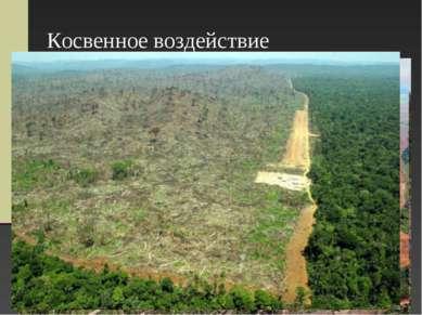 Косвенное воздействие Вырубка лесов