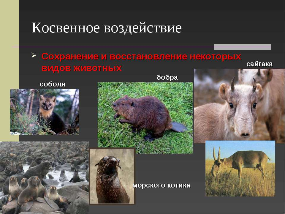 Косвенное воздействие Сохранение и восстановление некоторых видов животных са...