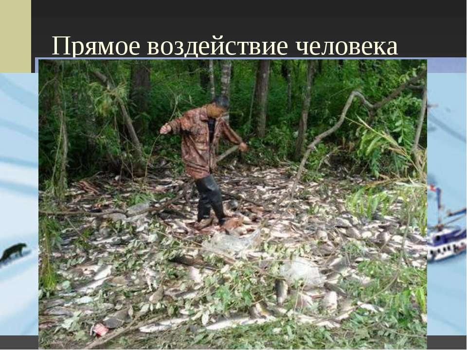Прямое воздействие человека Браконьерство в Крымском заповеднике На Алтае На ...