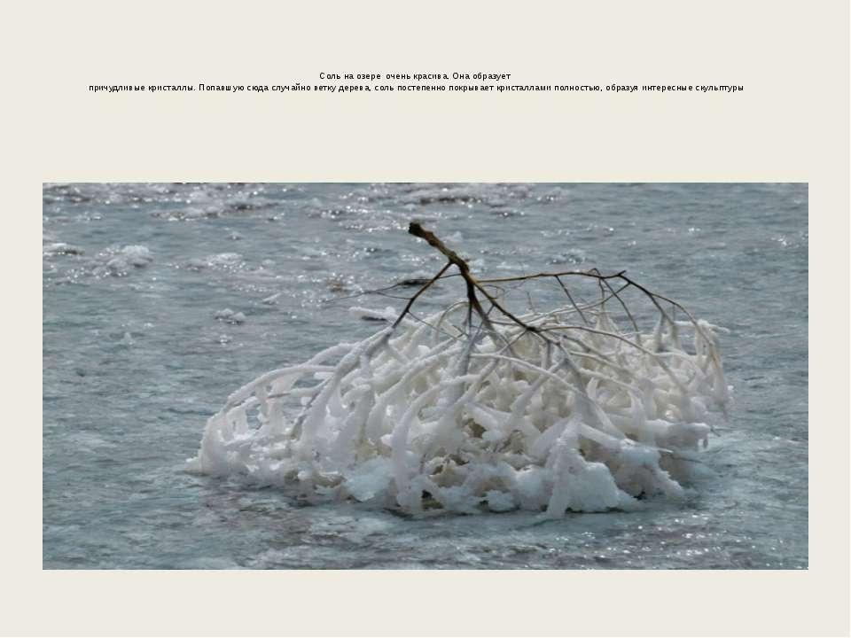 Соль на озере очень красива. Она образует причудливые кристаллы. Попавшую сюд...