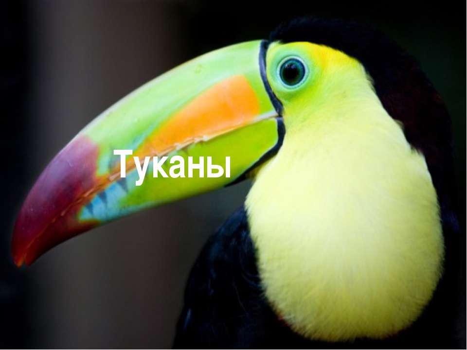 Туканы