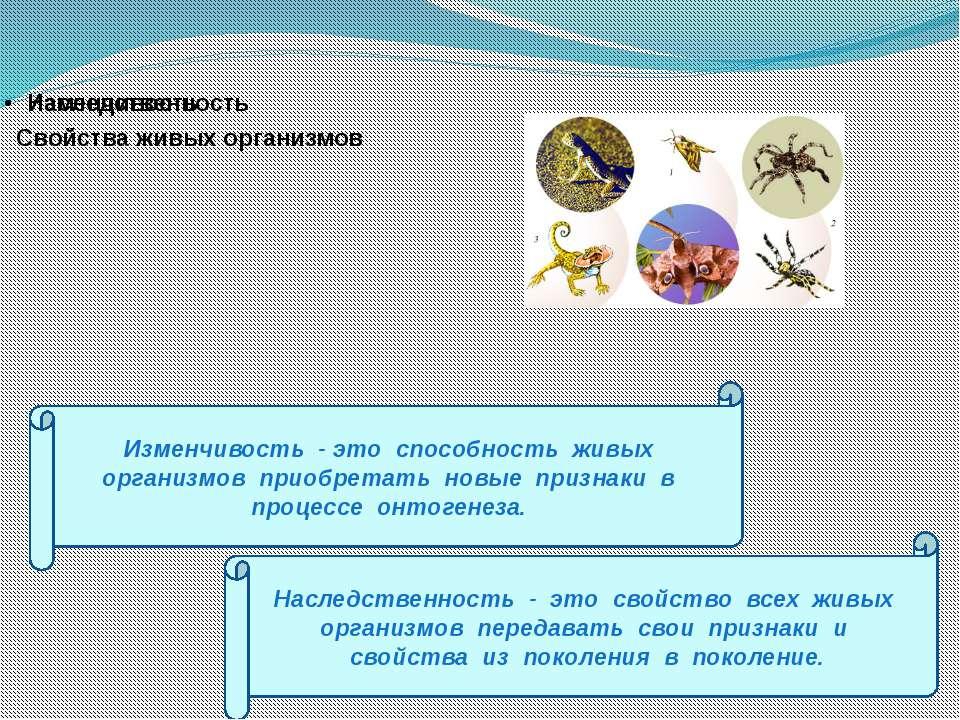 Картинка жизнедеятельность организмов