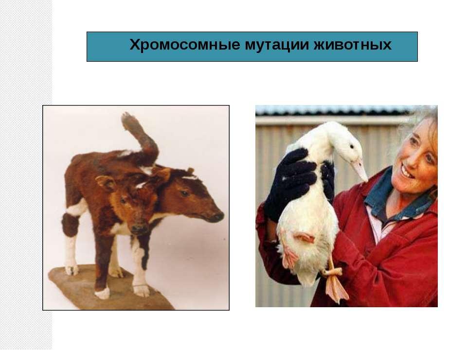 Хромосомные мутации животных