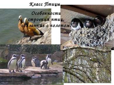 Класс Птицы. Особенности строения птиц, связанные с полетом.