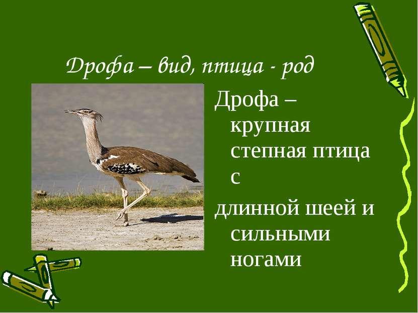 Дрофа – вид, птица - род Дрофа – крупная степная птица с длинной шеей и сильн...