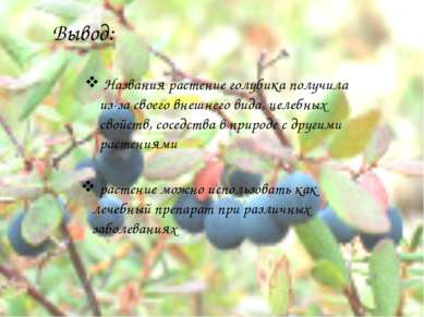 Вывод: Названия растение голубика получила из-за своего внешнего вида, целебн...