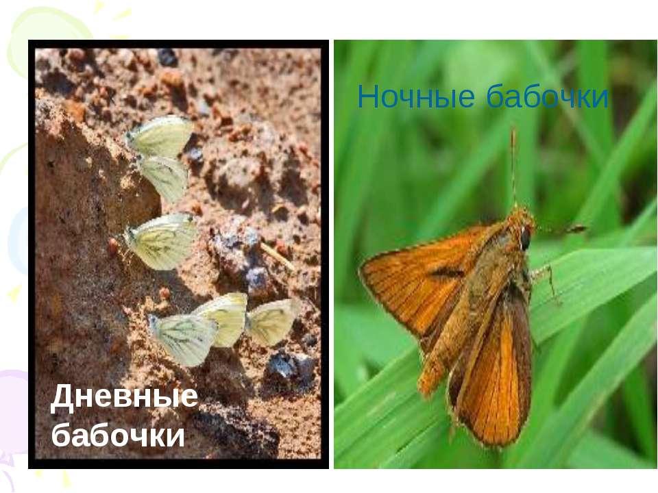 Дневные бабочки Ночные бабочки