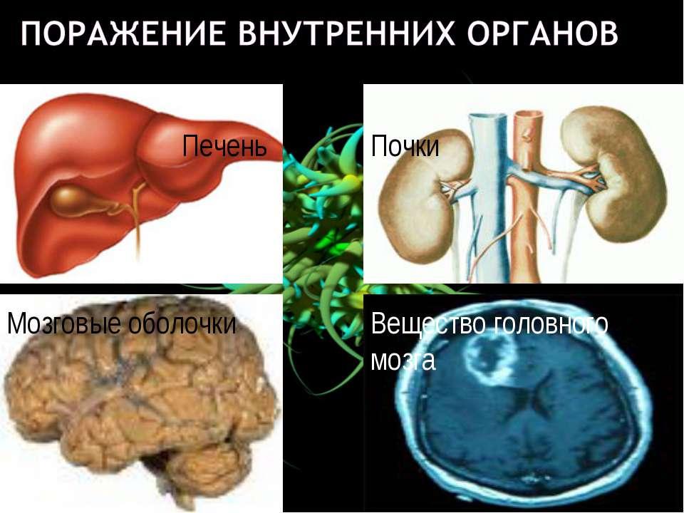 Печень Почки Мозговые оболочки Вещество головного мозга