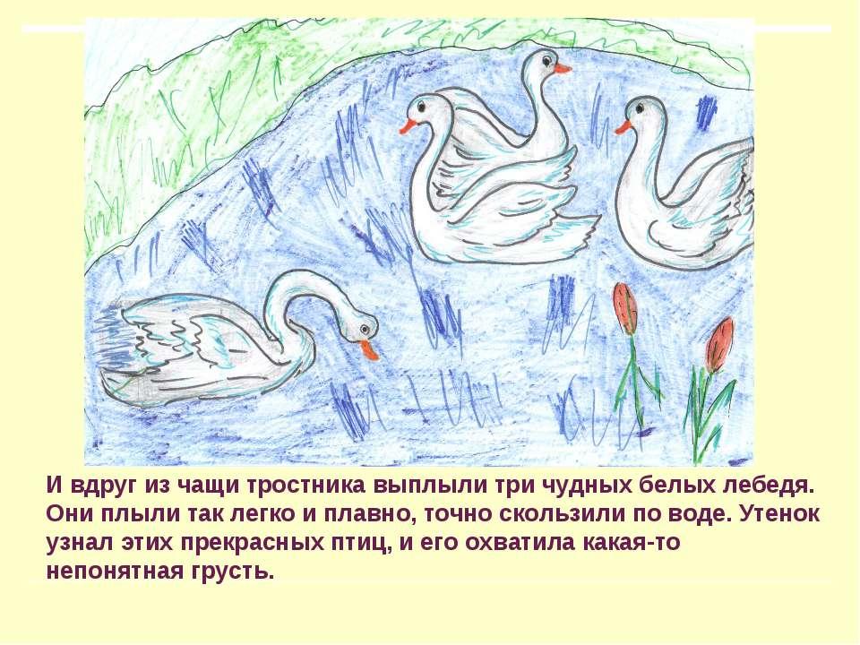 И вдруг из чащи тростника выплыли три чудных белых лебедя. Они плыли так легк...