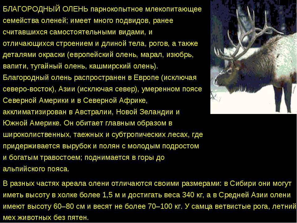 БЛАГОРОДНЫЙ ОЛЕНЬ парнокопытное млекопитающее семейства оленей; имеет много п...