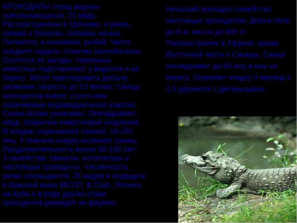 КРОКОДИЛЫ отряд водных пресмыкающихся, 21 вида. Распространены в тропиках, в ...