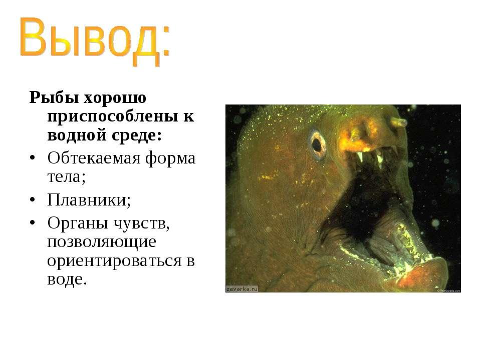Рыбы хорошо приспособлены к водной среде: Обтекаемая форма тела; Плавники; Ор...