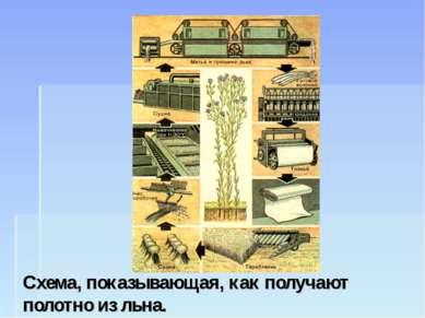 Схема, показывающая, как получают полотно из льна.