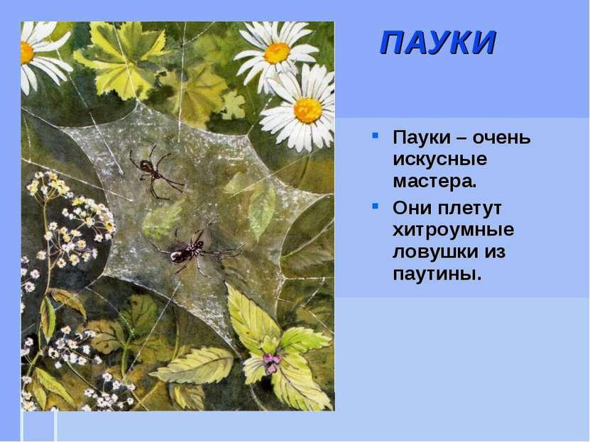 ПАУКИ Пауки – очень искусные мастера. Они плетут хитроумные ловушки из паутины.