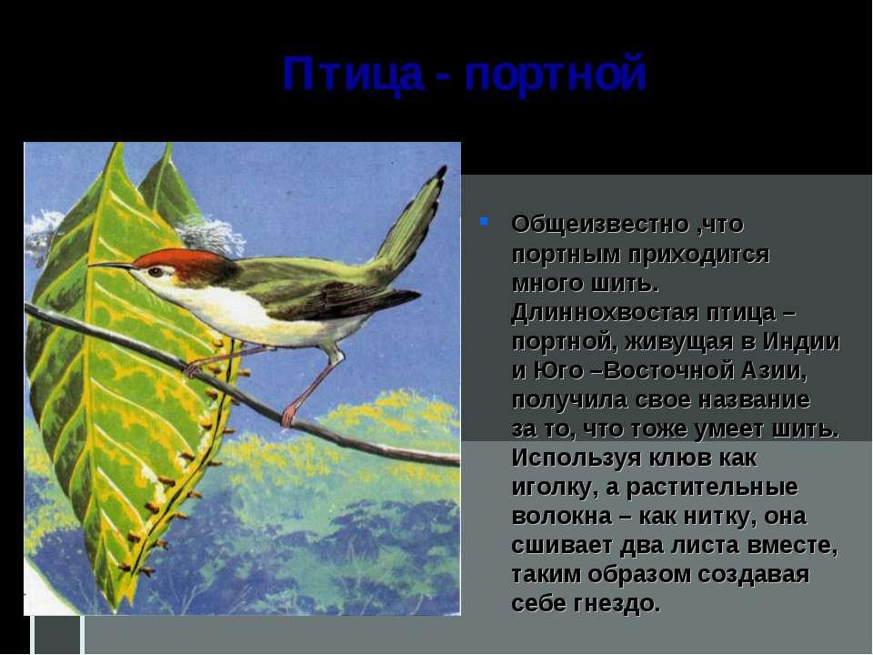 Птица - портной Общеизвестно ,что портным приходится много шить. Длиннохвоста...
