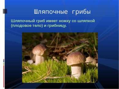 Шляпочный гриб имеет ножку со шляпкой (плодовое тело) и грибницу. Шляпочные г...