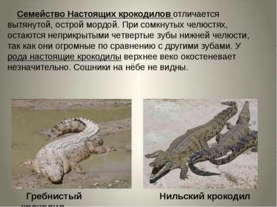 Семейство Настоящих крокодилов отличается вытянутой, острой мордой. При сомкн...