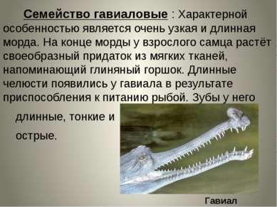 Семейство гавиаловые : Характерной особенностью является очень узкая и длинна...