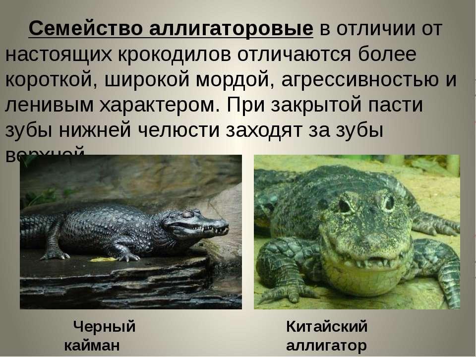 Семейство аллигаторовые в отличии от настоящих крокодилов отличаются более ко...