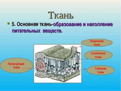 Ткань 5. Основная ткань-образование и накопление питательных веществ. Покровн...