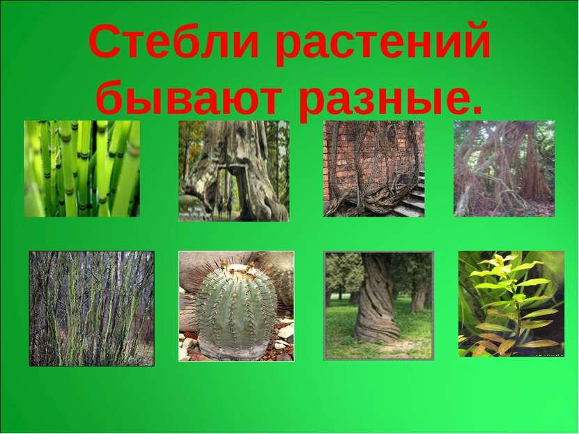 Стебли растений бывают разные.