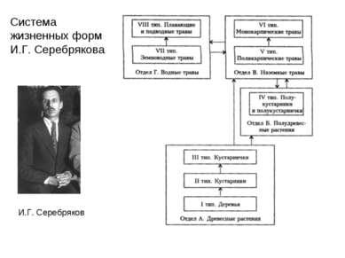 И.Г. Серебряков Система жизненных форм И.Г. Серебрякова